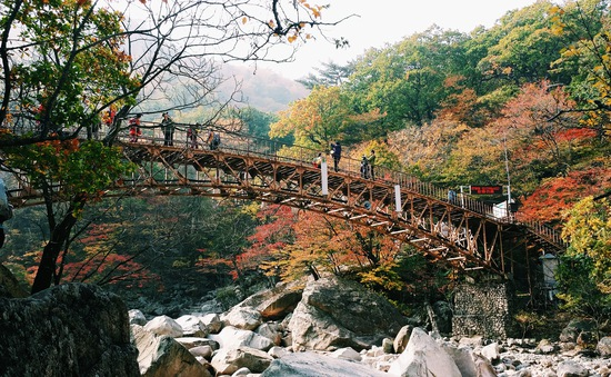 Lãng mạn trời thu xứ Hàn - Ảnh 2.