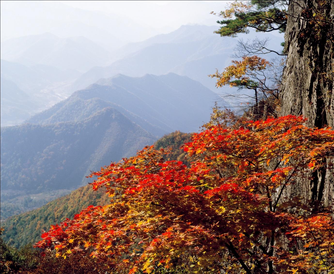 Lãng mạn trời thu xứ Hàn - Ảnh 3.