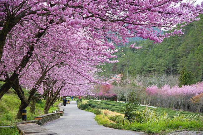 Trải nghiệm du lịch nông nghiệp tại Đài Loan với những cung đường đẹp ngất ngây, đáng giá từng xu - Ảnh 4.