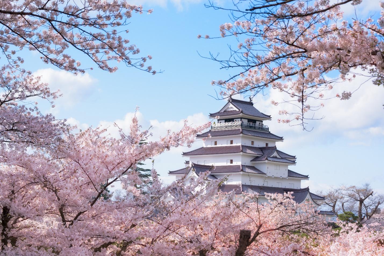 """Rủ nhau """"lạc"""" giữa ngàn hoa trên """"cung đường kim cương"""" Nhật Bản - Ảnh 1."""