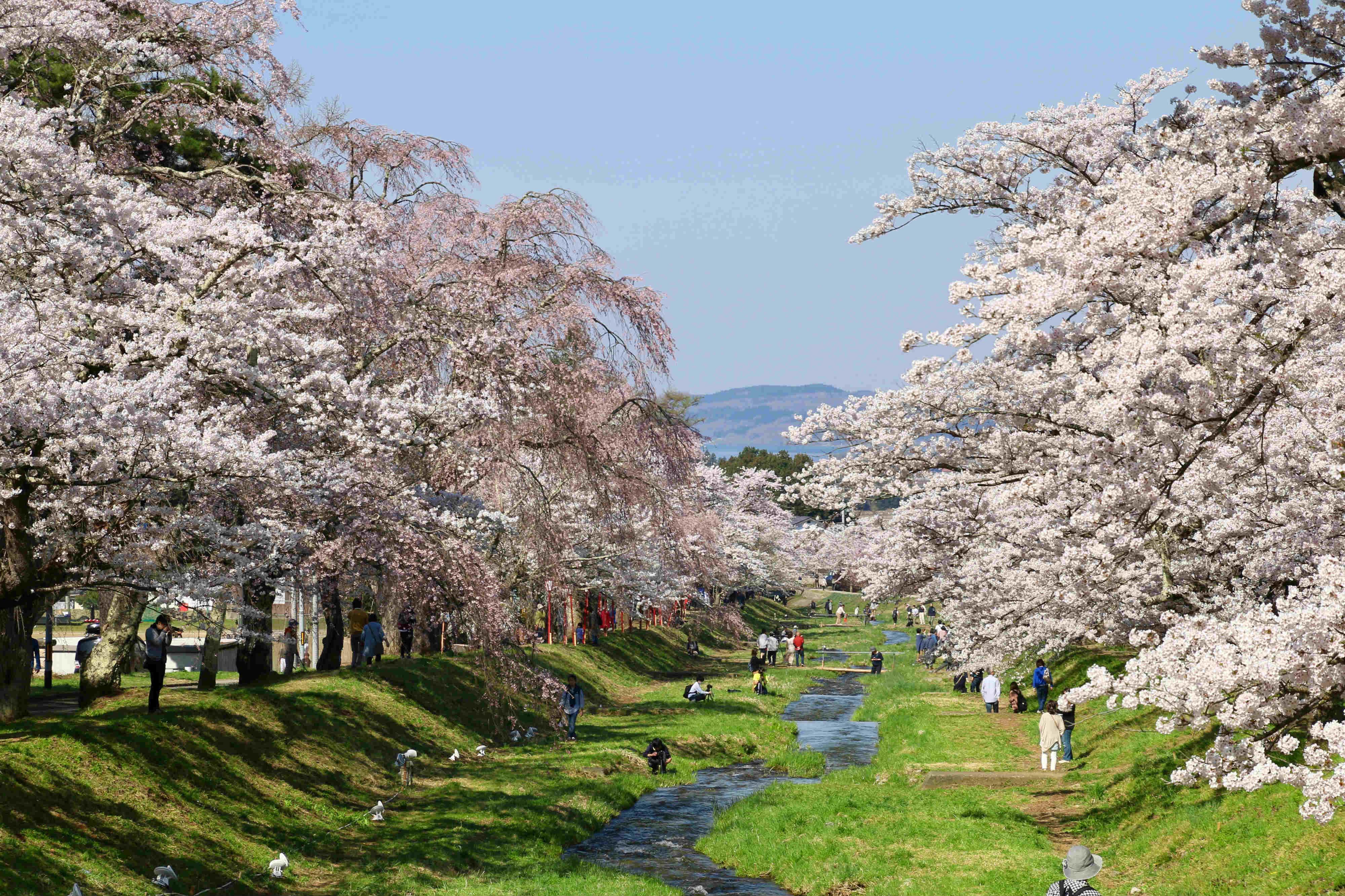 """Rủ nhau """"lạc"""" giữa ngàn hoa trên """"cung đường kim cương"""" Nhật Bản - Ảnh 2."""