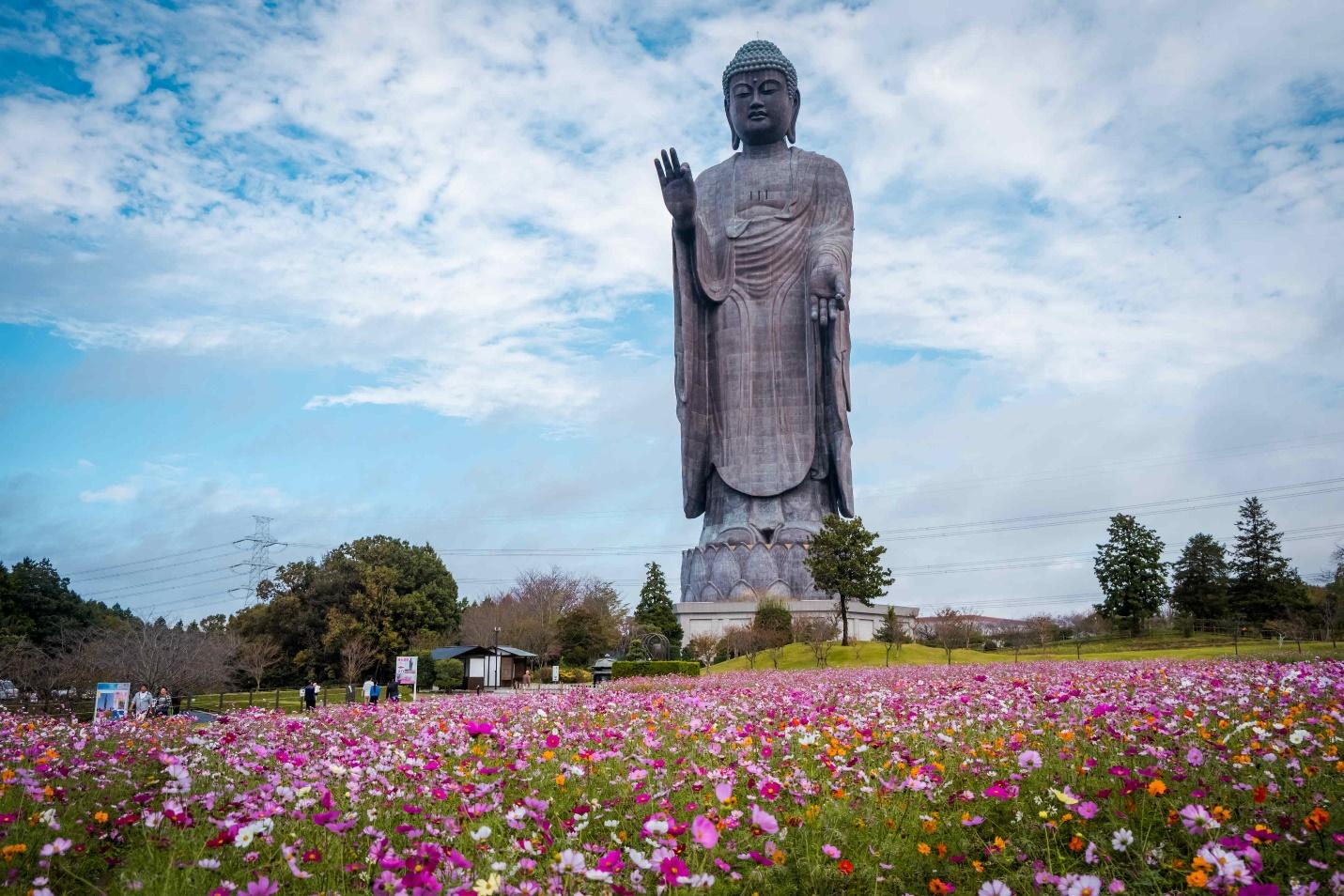 """Rủ nhau """"lạc"""" giữa ngàn hoa trên """"cung đường kim cương"""" Nhật Bản - Ảnh 5."""