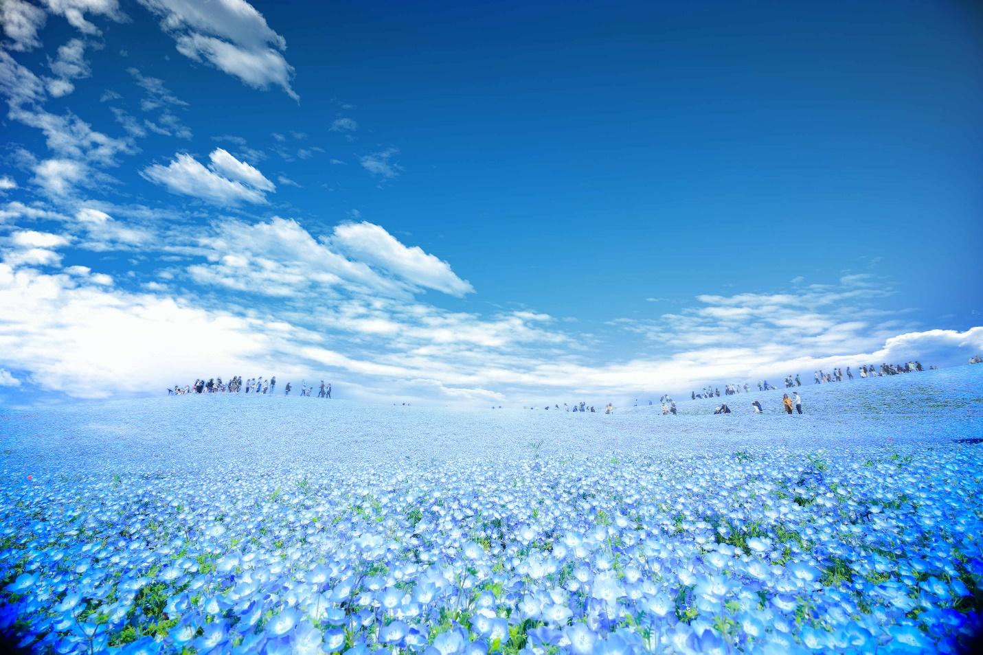 """Rủ nhau """"lạc"""" giữa ngàn hoa trên """"cung đường kim cương"""" Nhật Bản - Ảnh 7."""