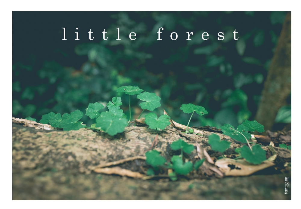 Lost in little forest