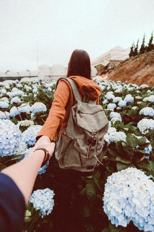 Follow me tại cánh đồng hoa cẩm tú cầu