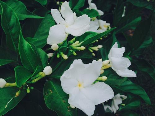 Mình yêu từ những điều nhỏ nhất như các loài hoa, loại quả nơi đây. Nó giúp mình gần gũi hoà mình với thiên nhiên như được mẹ thiên nhiên bao bọc chở che vậy đó.