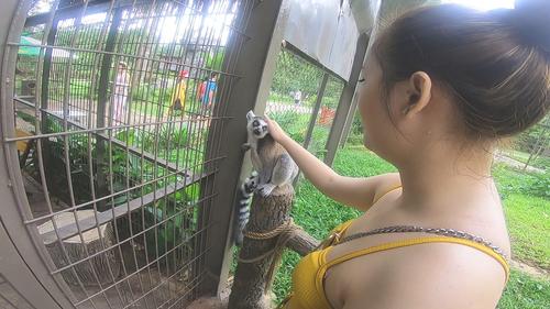 Vui đùa cùng thú nuôi trong Safari.