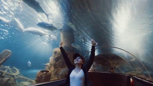 Thủy cung dưới biển sâu.