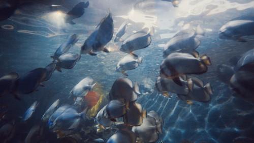 Với những chú cá y như trong phim