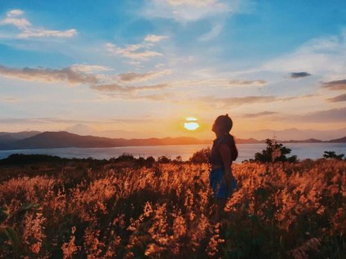Đồi cỏ hồng lung linh dưới ánh nắng hoàng hôn