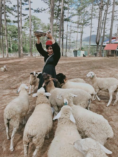 Cho đàn cừu ăn tại Zoodoo. Các em ngoan lắm mà yêu nữa