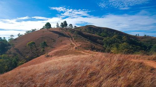 Đồi cỏ cháy đầy thơ mộng của đất Tà Năng - Phan Dũng