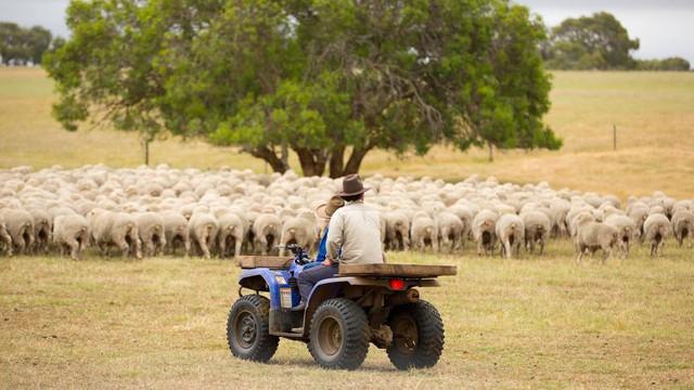 Đầu tư nông nghiệp – Cơ hội vàng định cư tại Úc cho doanh nhân Việt - Ảnh 1.