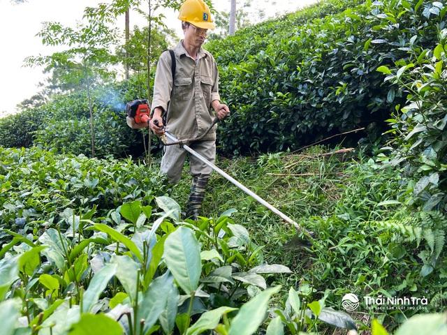 Thái Ninh Trà – thương hiệu trà Thái Nguyên truyền thống - Ảnh 1.