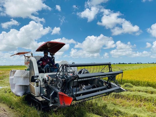 Lối đi nào cho ngành sản xuất lúa gạo Việt Nam? - Ảnh 1.