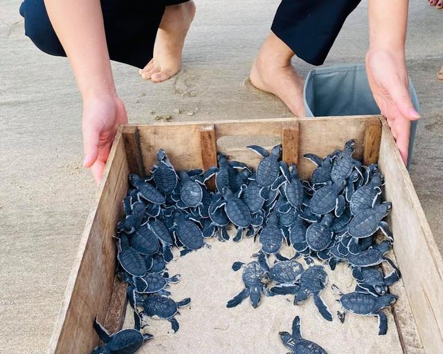 Ông Trịnh Văn Quyết kể khoảnh khắc thả rùa con về biển: trải nghiệm kỳ thú bậc nhất tại Côn Đảo - Ảnh 1.