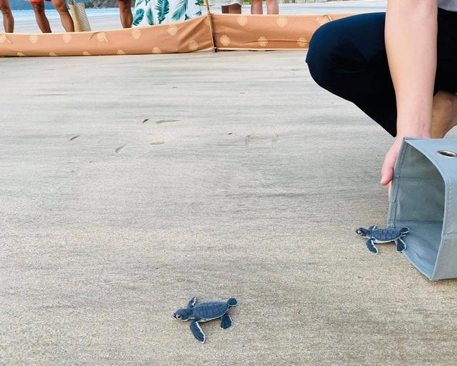 Ông Trịnh Văn Quyết kể khoảnh khắc thả rùa con về biển: trải nghiệm kỳ thú bậc nhất tại Côn Đảo - Ảnh 2.