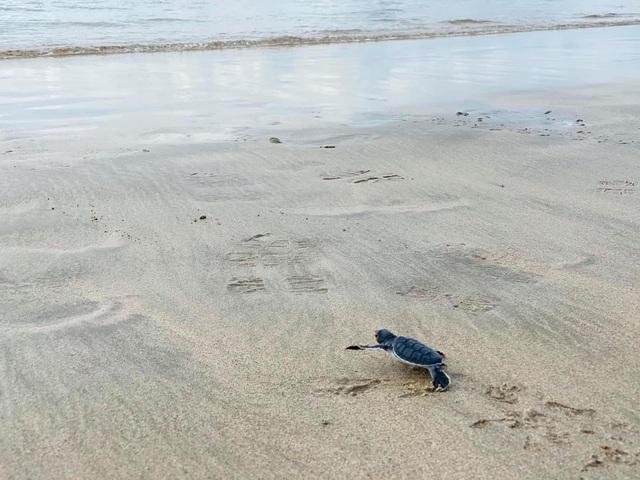 Ông Trịnh Văn Quyết kể khoảnh khắc thả rùa con về biển: trải nghiệm kỳ thú bậc nhất tại Côn Đảo - Ảnh 3.