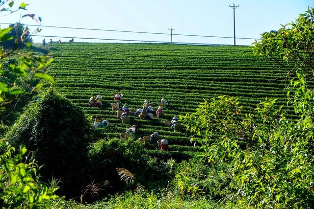 Nhiều đại gia bất động sản tìm kiếm nhà vườn view đồi núi ở Bảo Lộc - Ảnh 2.
