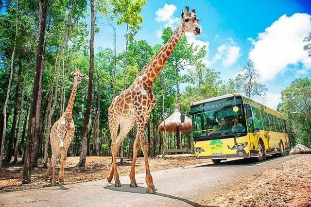 Du lịch nghỉ dưỡng Phú Quốc: Phát triển lâu dài cùng môi trường và con người - Ảnh 2.  Du lịch nghỉ dưỡng Phú Quốc: Phát triển lâu dài cùng môi trường và con người photo 2 15825128921361189987612