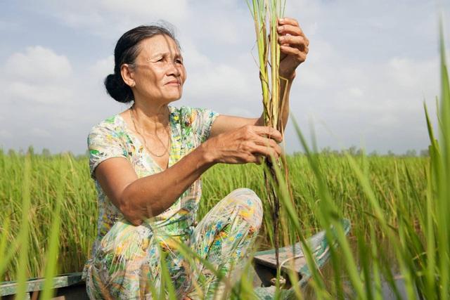 Nông dân Việt Nam được hỗ trợ từ dự án toàn cầu của Bayer - Ảnh 1.
