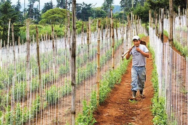 Nông dân Việt Nam được hỗ trợ từ dự án toàn cầu của Bayer - Ảnh 2.