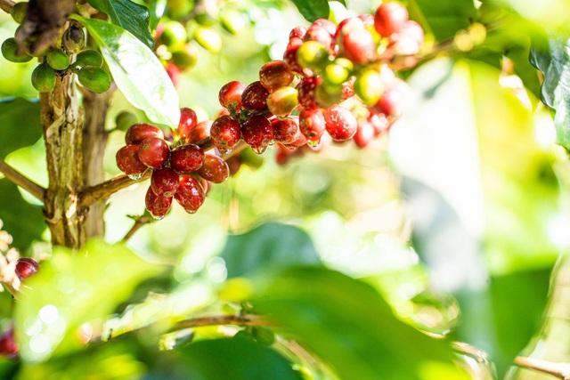 SHIN Cà Phê nâng tầm nông sản việt bằng bộ sản phẩm Quà tặng doanh nghiệp - Ảnh 4.