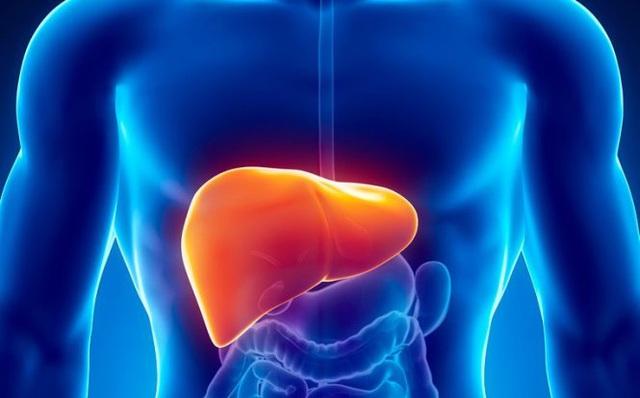 Công nghệ sinh học trong giải độc gan - Lựa chọn hiệu quả để bảo vệ sức khỏe toàn diện - Ảnh 1.