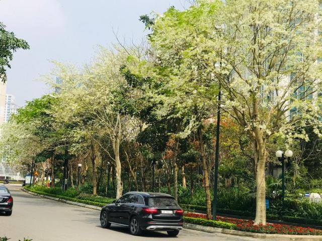 Ấn tượng sắc xuân tại Ciputra Hanoi - Ảnh 2.