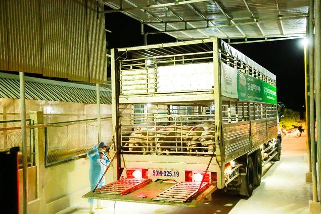 GREENFEED xuất khẩu heo giống tiêu chuẩn quốc tế ra thị trường khu vực - Ảnh 3.