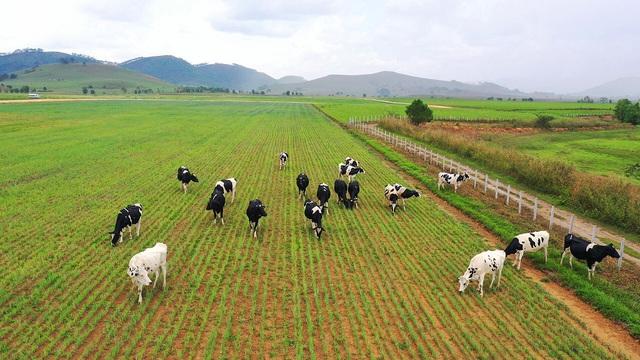 Tổ hợp trang trại tại Lào của Vinamilk đẩy nhanh tiến độ hoàn thành giai đoạn 1 - Ảnh 3.