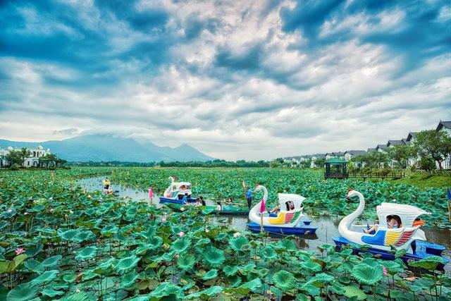 Vườn Vua Resort & Villas khởi tạo festival hoa sen tại đầm sen Bạch Thủy - Ảnh 2.