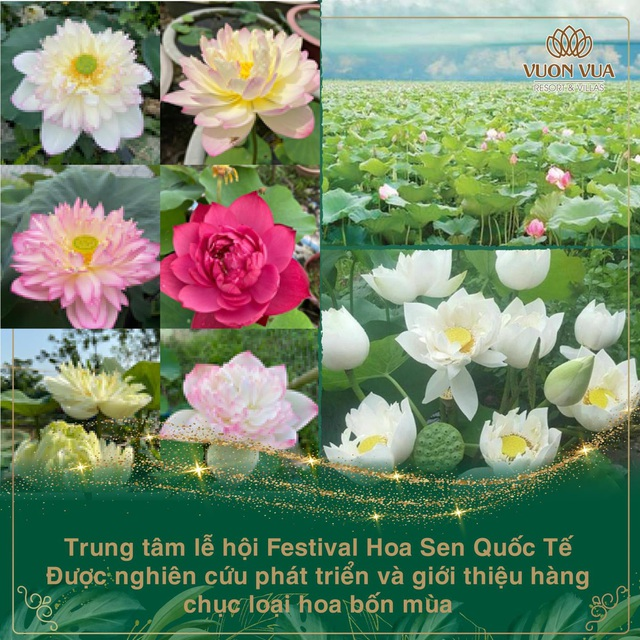 Vườn Vua Resort & Villas khởi tạo festival hoa sen tại đầm sen Bạch Thủy - Ảnh 3.