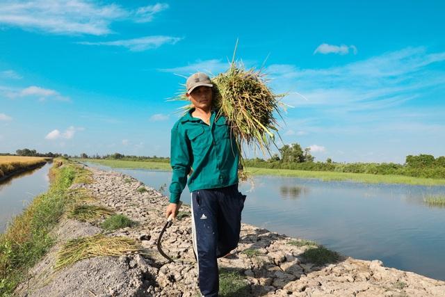 Gạo Việt tự tin chinh phục người tiêu dùng - Ảnh 1.