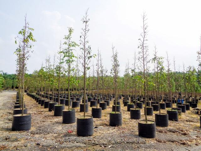 Đô thị thông minh phải gắn liền với môi trường bền vững - Ảnh 2.