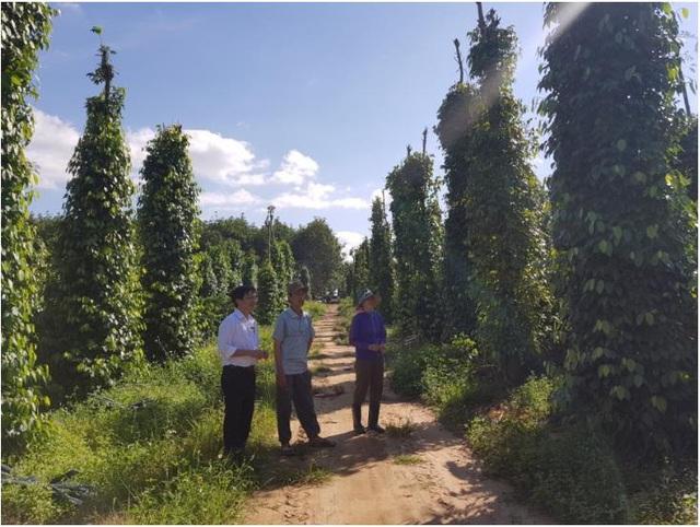 Agribank đẩy mạnh đầu tư và gia tăng dịch vụ tài chính trên thị trường Tam nông - Ảnh 1.
