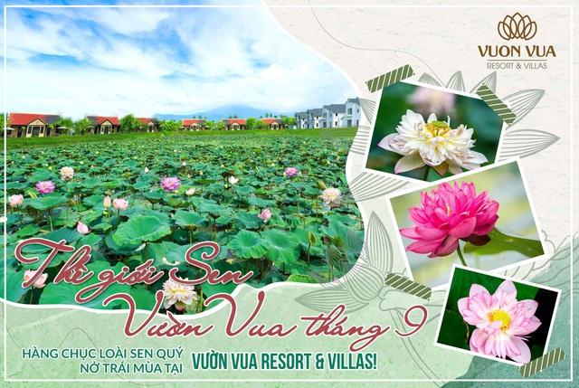 Vườn Vua Resort & Villas: Tiến gần hơn đến mục tiêu hình thành Festival hoa sen Quốc tế - Ảnh 1.