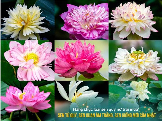 Vườn Vua Resort & Villas: Tiến gần hơn đến mục tiêu hình thành Festival hoa sen Quốc tế - Ảnh 2.