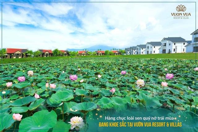 Vườn Vua Resort & Villas: Tiến gần hơn đến mục tiêu hình thành Festival hoa sen Quốc tế - Ảnh 4.