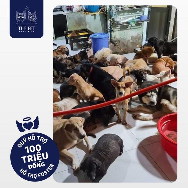 Thepet.vn lập quỹ 100 triệu đồng tặng pate tươi miễn phí cho chó mèo cơ nhỡ tại Sài Gòn - Ảnh 2.