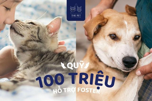 Thepet.vn lập quỹ 100 triệu đồng tặng pate tươi miễn phí cho chó mèo cơ nhỡ tại Sài Gòn - Ảnh 3.