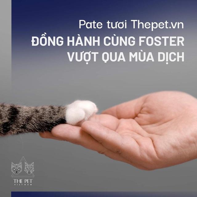 Thepet.vn lập quỹ 100 triệu đồng tặng pate tươi miễn phí cho chó mèo cơ nhỡ tại Sài Gòn - Ảnh 5.