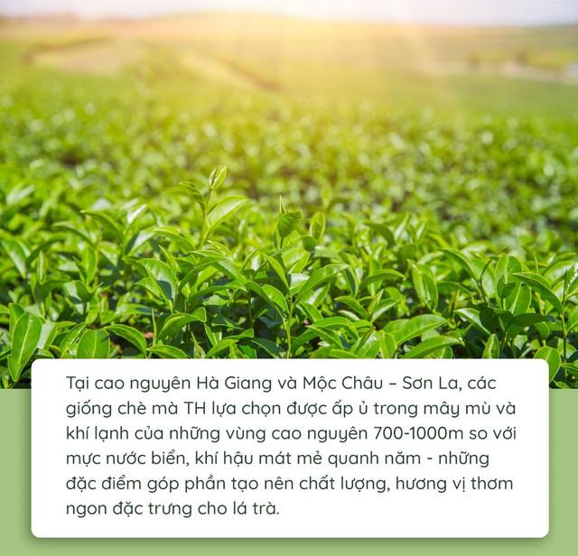 Quy trình làm ra chai trà hoàn toàn tự nhiên chinh phục cộng đồng healthy - Ảnh 2.