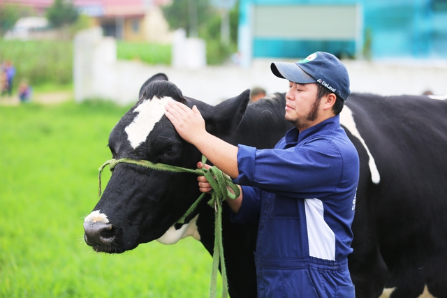 Bò sữa nô nức đi trẩy hội Hoa Hậu Bò Sữa 2018 ở Mộc Châu - Ảnh 1.