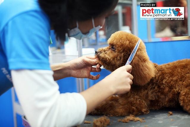 Dịch vụ cắt tỉa lông chó tăng trưởng mạnh trong năm nay - Ảnh 1.