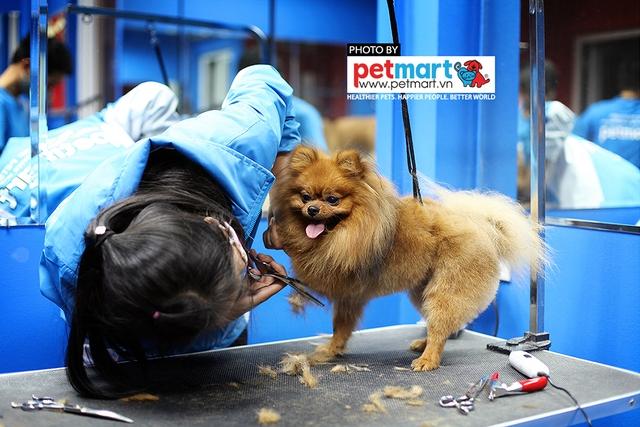 Dịch vụ cắt tỉa lông chó tăng trưởng mạnh trong năm nay - Ảnh 2.