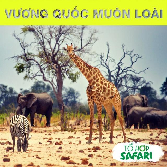 Tổ hợp safari khai trương - Giới trẻ Hà thành lại có thêm điểm đến mới để check-in - Ảnh 2.